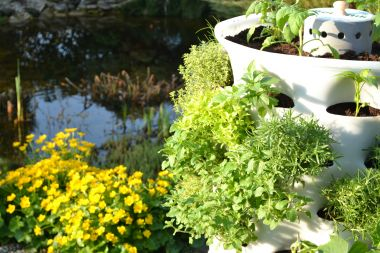 Koupit nebo pěstovat?