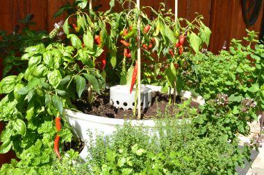 Myšlenka hlavního zahradníka pro Berdík
